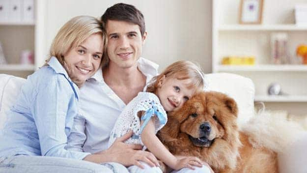Wills & Trusts dog-young-family Direct Wills Balsall